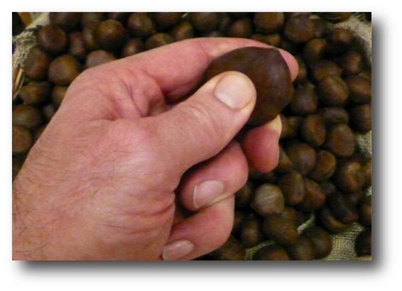Selecting Fresh Chestnuts